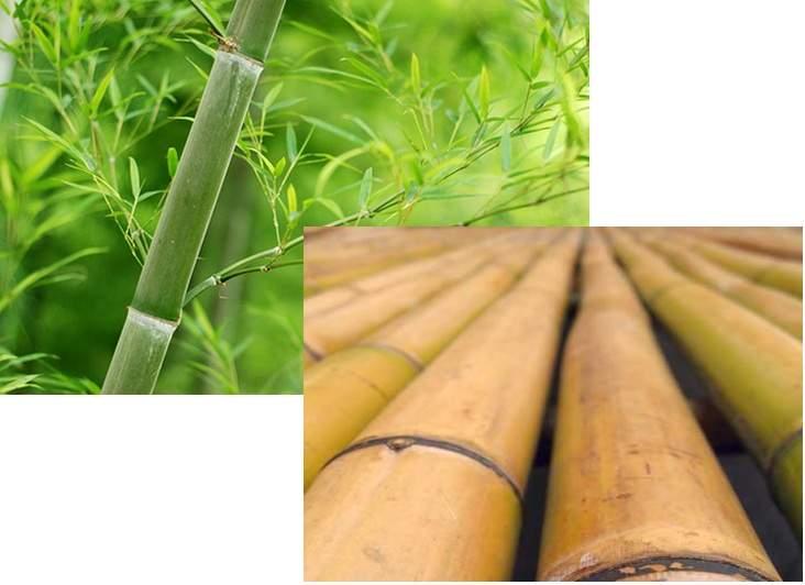 پاورپوینت بررسی تثبیت و تورم خاک رس گرگان توسط گیاه بامبو